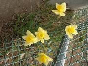 008_flower
